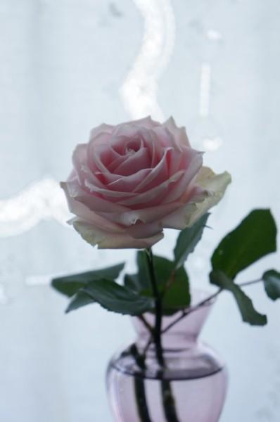 待ち遠しい薔薇の季節