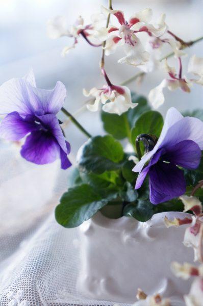 春を告げる可憐な花を♪