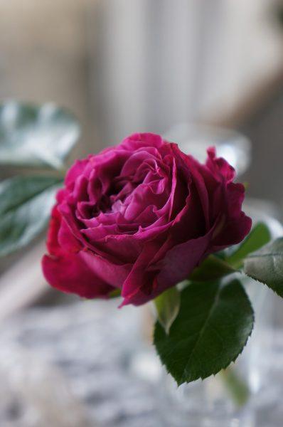 ちいさな薔薇を一輪
