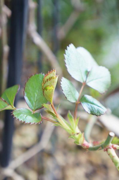 新緑の季節へ